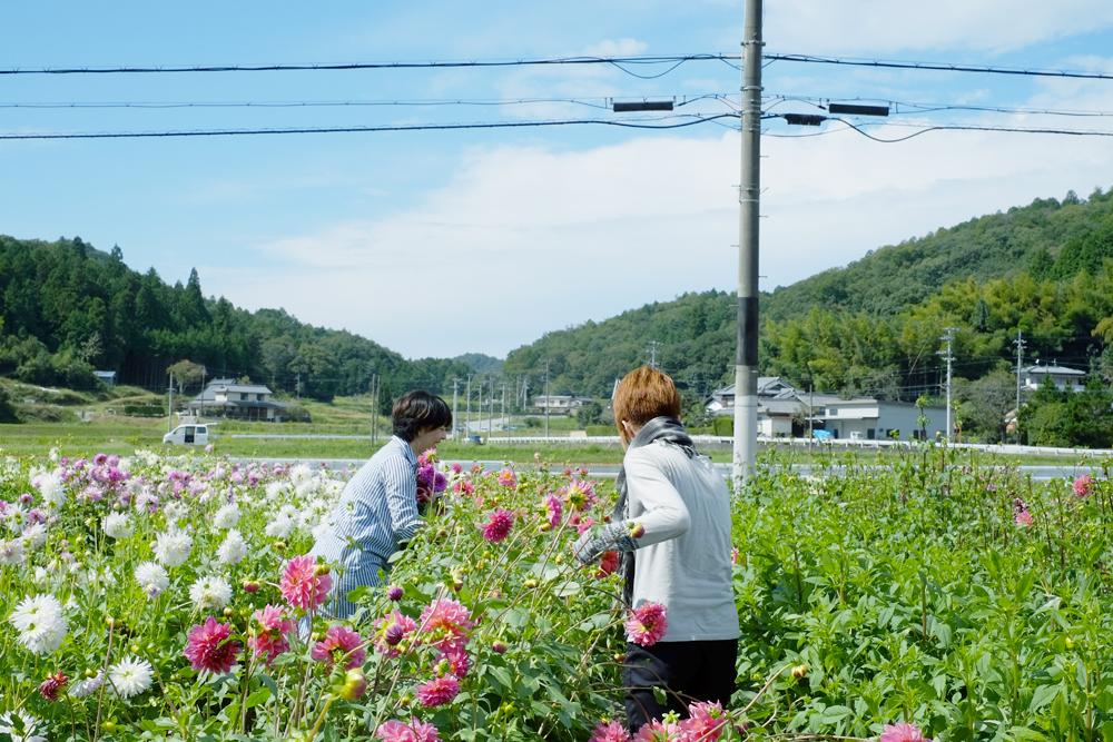 photo-kamisasori227