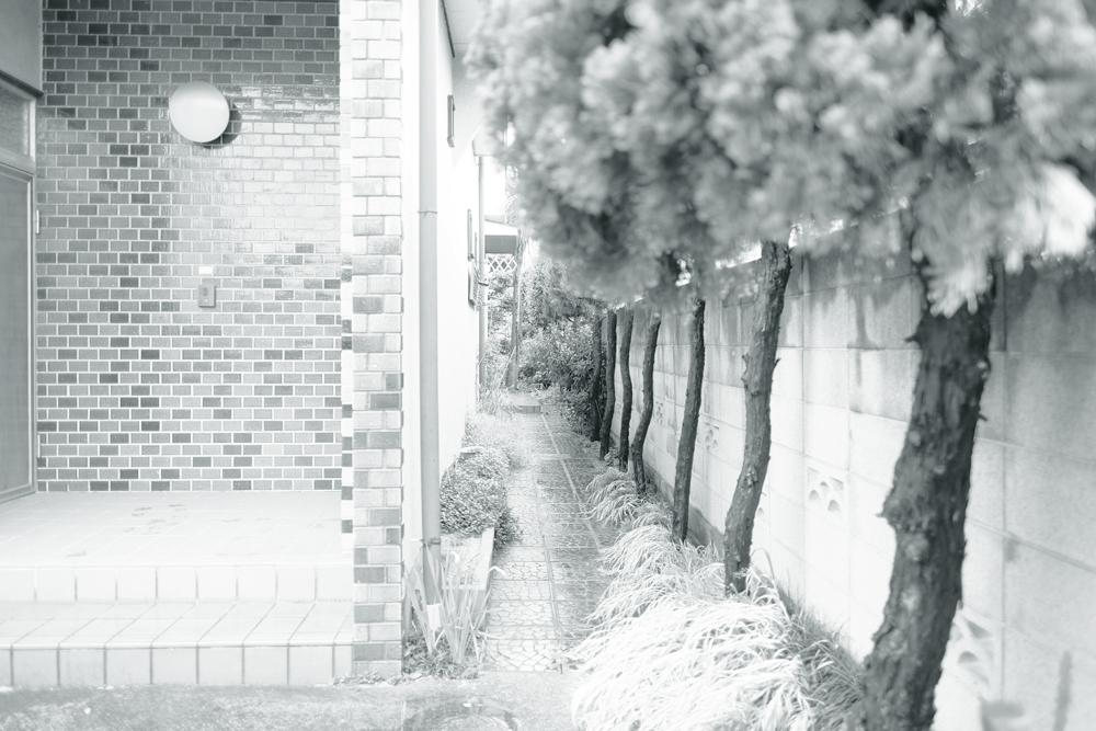 photo-hanakoganei137