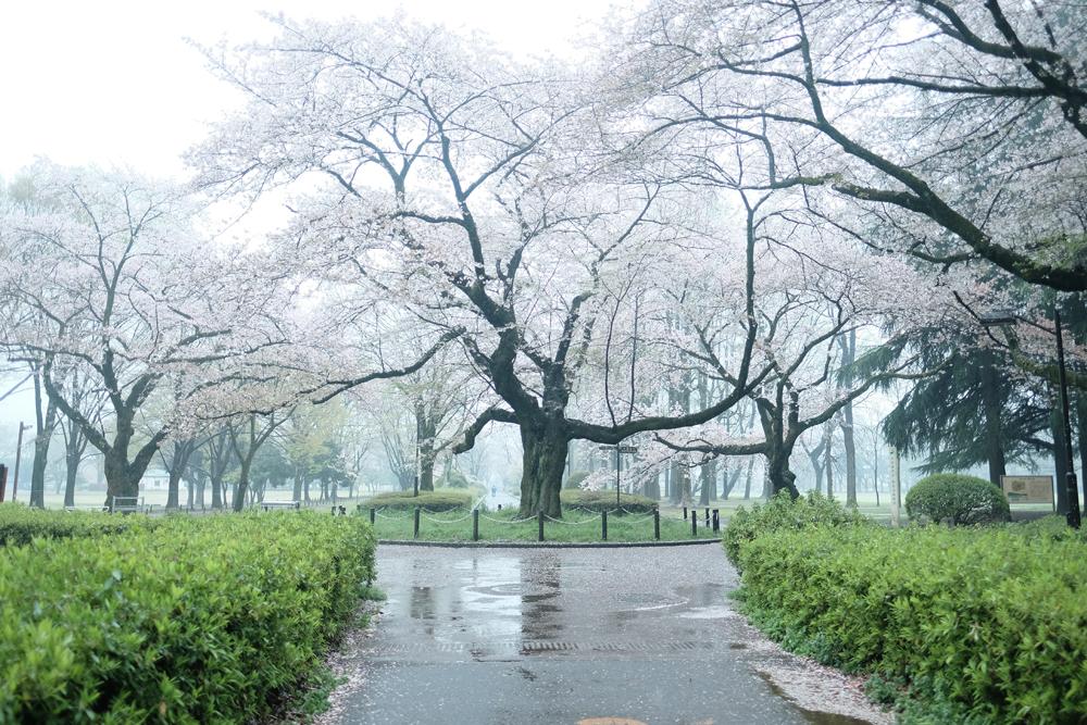 photo-hanakoganei163