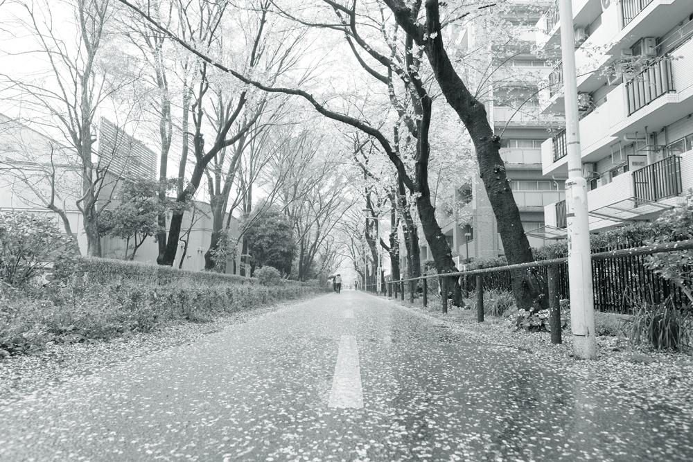 photo-hanakoganei69