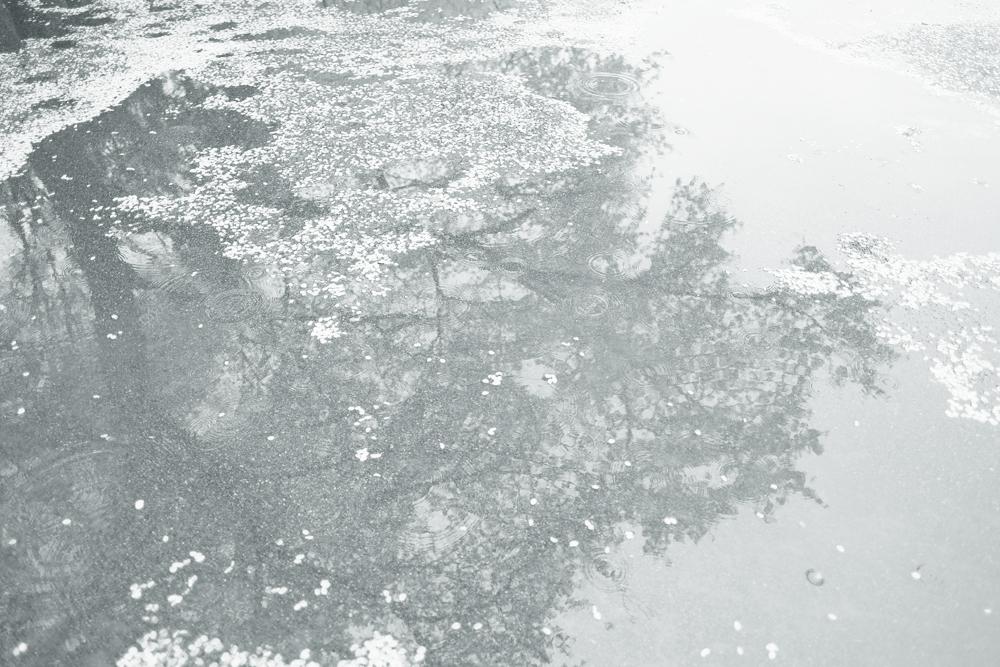 photo-hanakoganei99