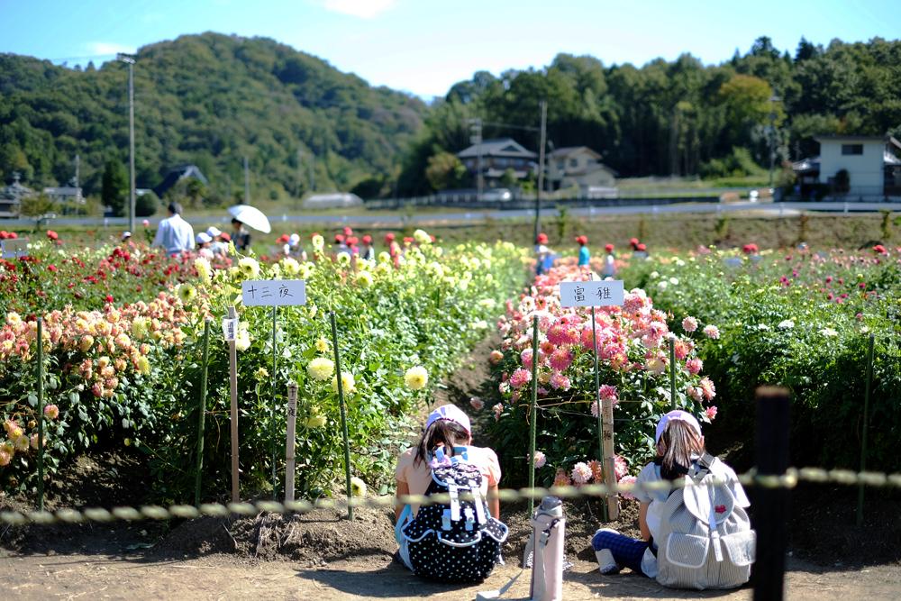 photo-kamisasori179