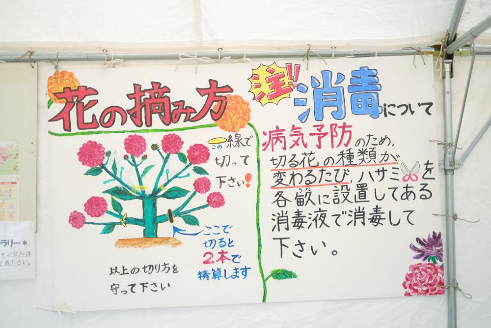 photo-kamisasori181