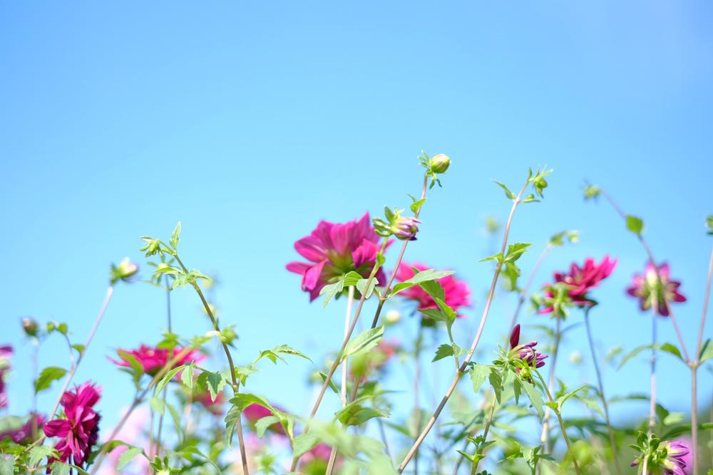 photo-kamisasori297