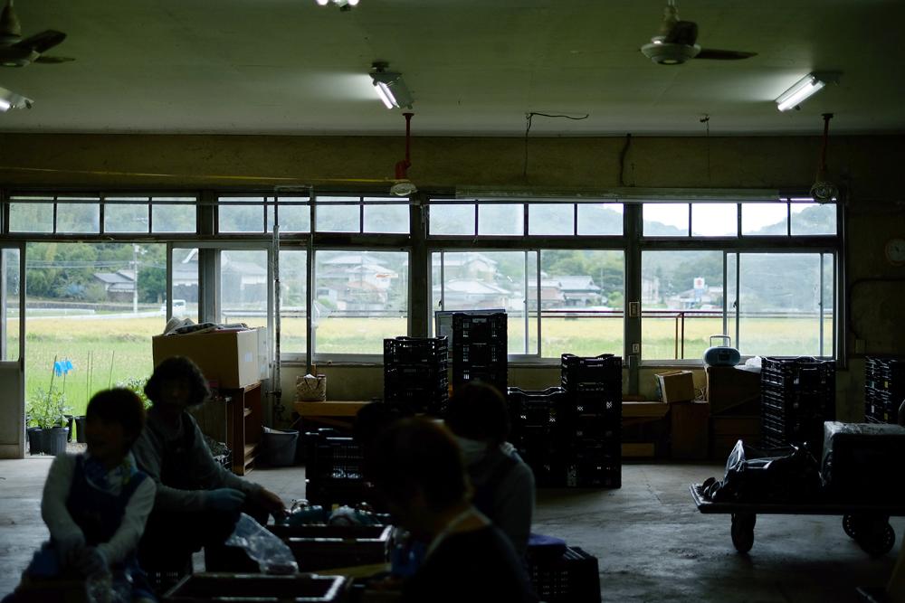 photo-kamisasori33